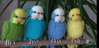 Crochet Parakeet ideas